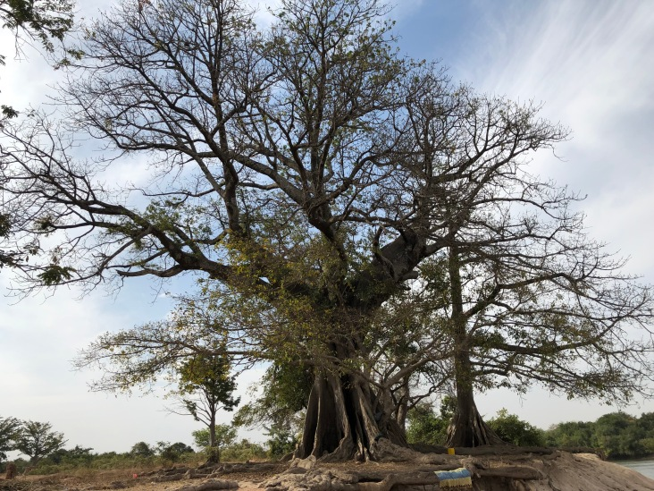 The baobab tree that greets you when you cross the Djoliba