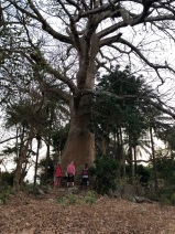 One of my favorite trees in Guinea